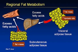 What Happens To The Body When We Lose Fat & Gain Muscles